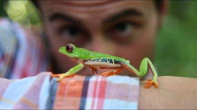 Campaña medioambiental follow de frog